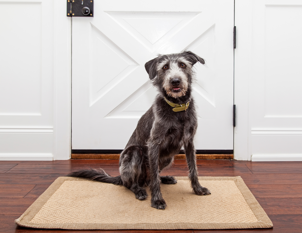 How To Protect Wood Floors From Paws Claws And In Laws