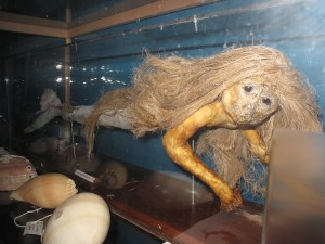Photo of stuffed mermaid in Liège museum