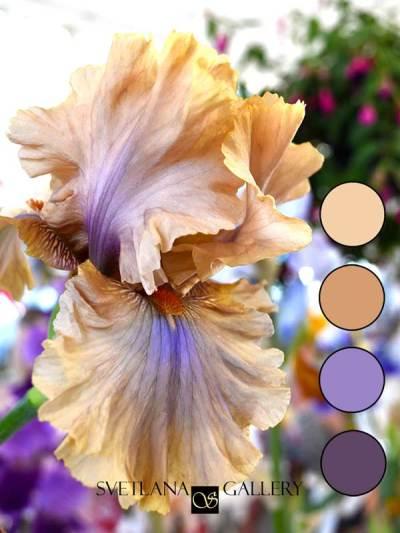 Iris Flower Delica Bead Color Palettes - Palette #1