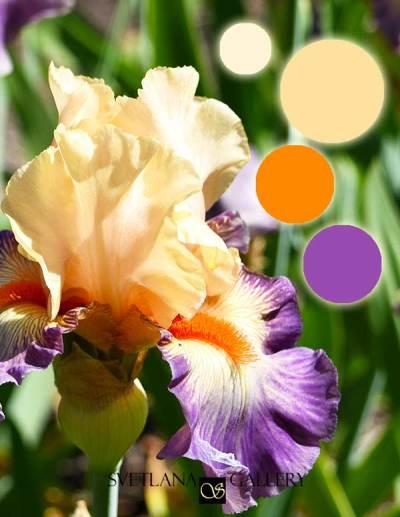 Iris Flower Delica Bead Color Palettes - Palette #3