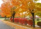 Dolazi jesen 3