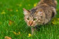 Animal Communication 1