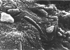 Meteorit sa Marsa ALH84001 3