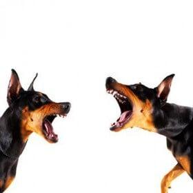Dog-Aggression-280x280