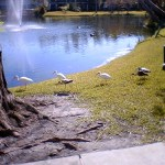 8076 – more wildlife out back