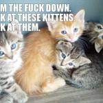 calm down. kittens.