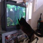 Pyewacket loves fishtank tv