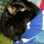 too much fabric softener results in pyewacket