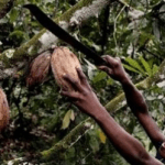 Court rules Nestlé and other chocolate companies can be sued for using cocoa harvested by overseas child labor.