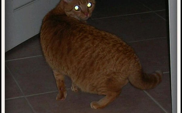 Newton laser cat spin 10 years ago. https://t.co/WAiyy76H9r https://t.co/mMAjJuDiZA