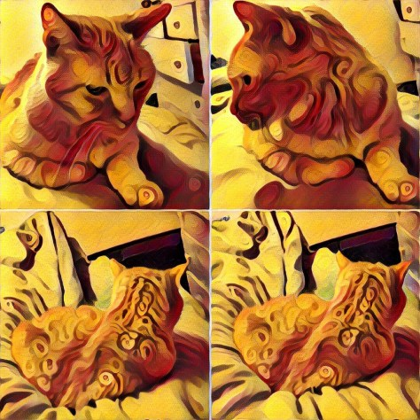 Newton cat under candy prisma filter