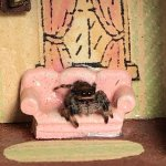Real spider, toy house