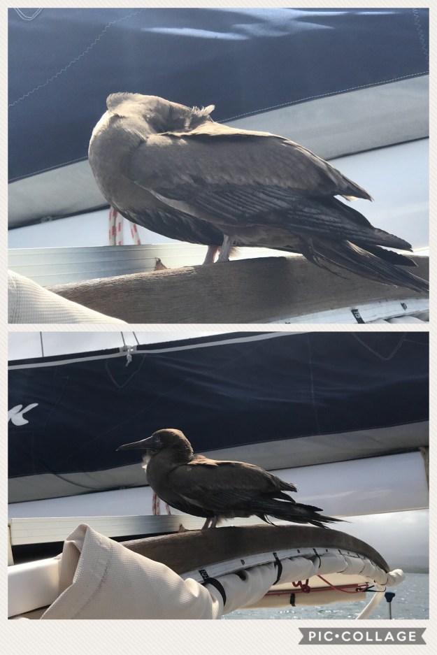 Stupid BIRD!