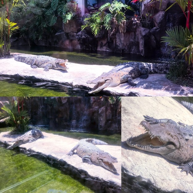 Paco and Luna Crocs at Croc's Casino and Beach Resort