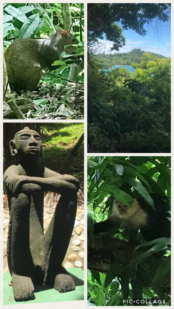 Agouti and Monkeys at Tulemar Resort