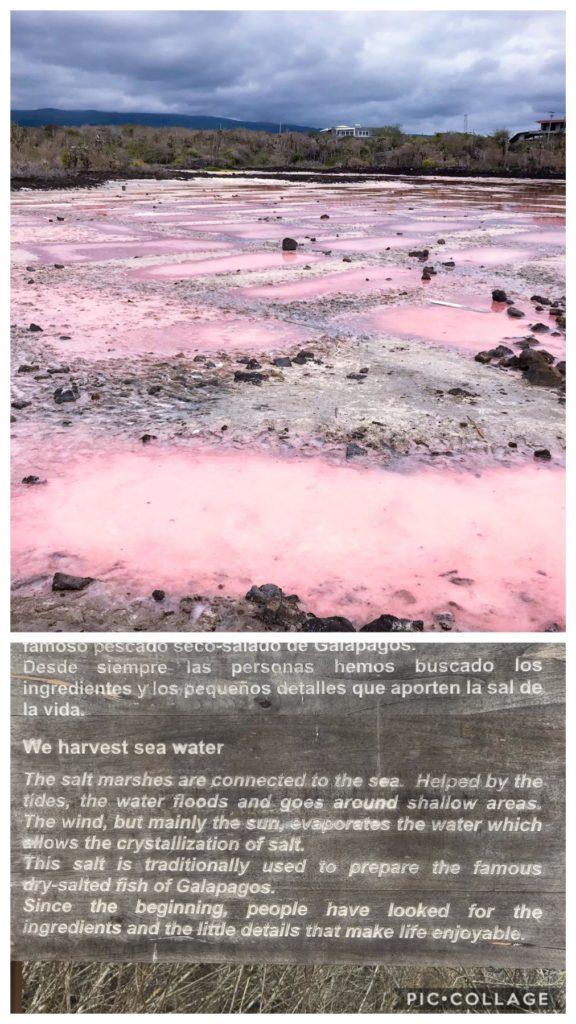 Galapagos Salt Pond