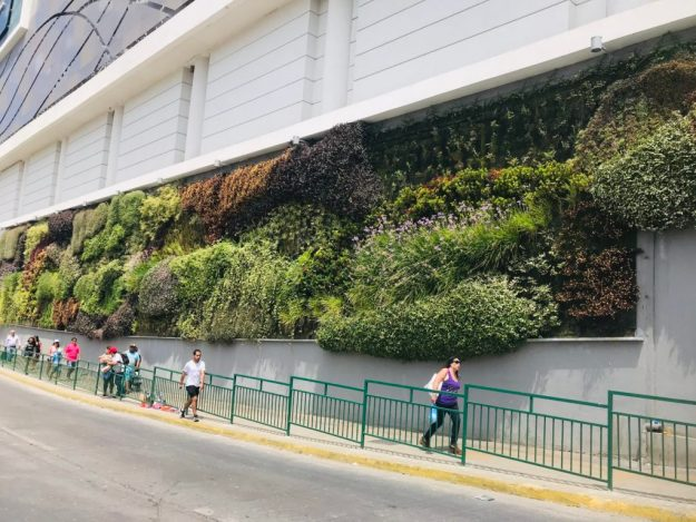 Living wall on side of mall, Coquimbo