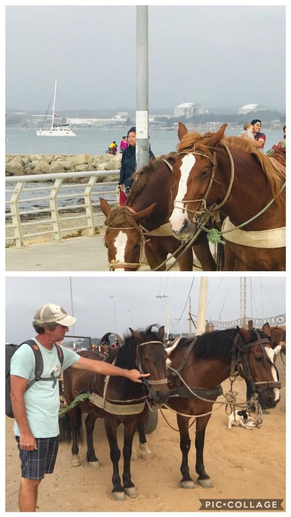 Horses in Quintero