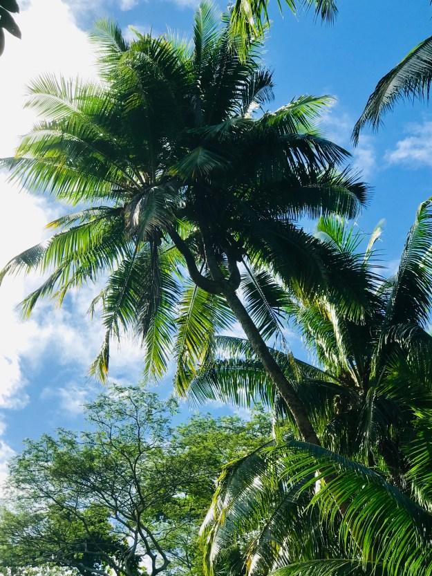 Taha'a Unique Palm Tree