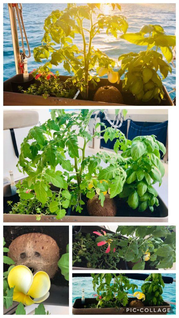 Herb Garden on board