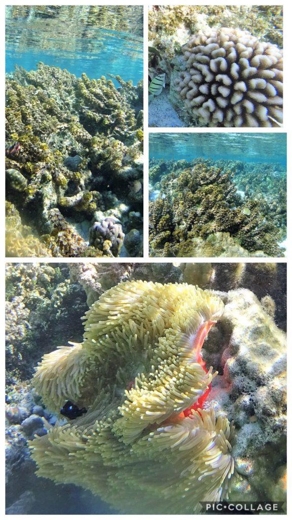 Coral Gardens Snorkel