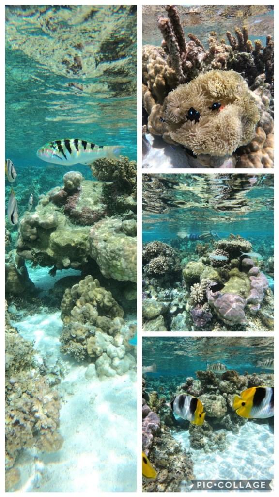 Coral Gardens Taha'a