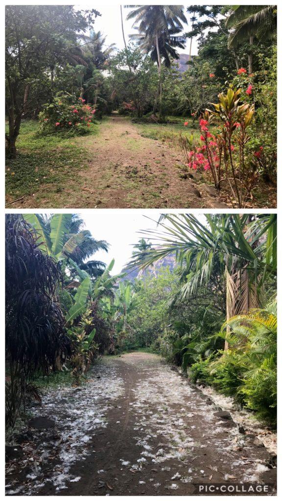 One road in Daniel's Bay