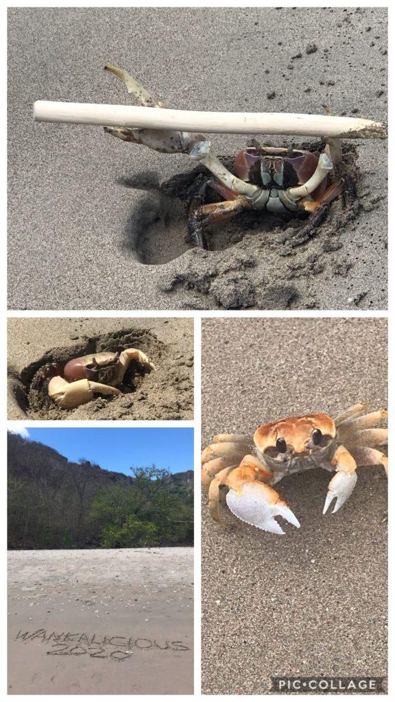 Beach walk and crab friends