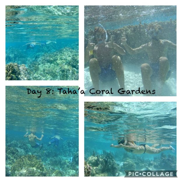 Snorkeling the Coral Gardens