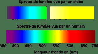"""Résultat de recherche d'images pour """"perception lumineuse du chien"""""""