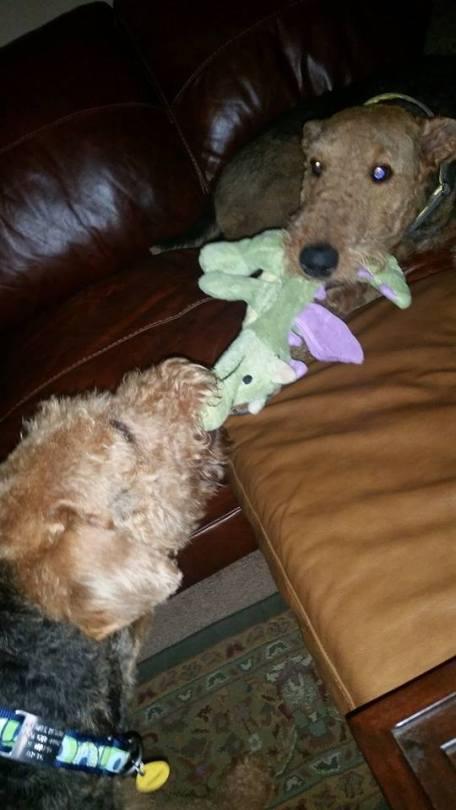Macy and Teddy Tug