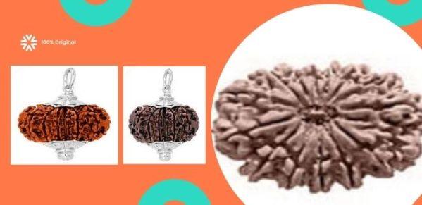 lab-certified-13-mukhi-rudraksha