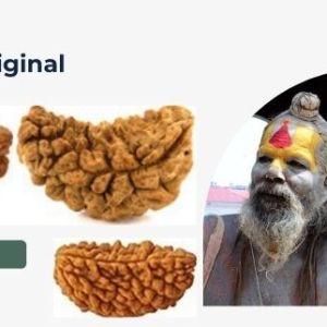 mantra-siddha-1-mukhi-rudraksha
