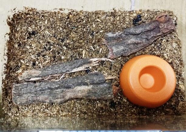 Terrarium pour scarabée rhinocéros - 06