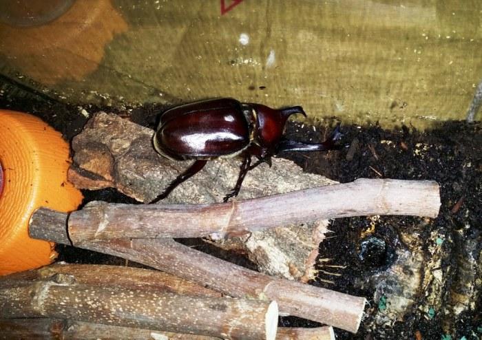 Terrarium pour scarabée rhinocéros - 10