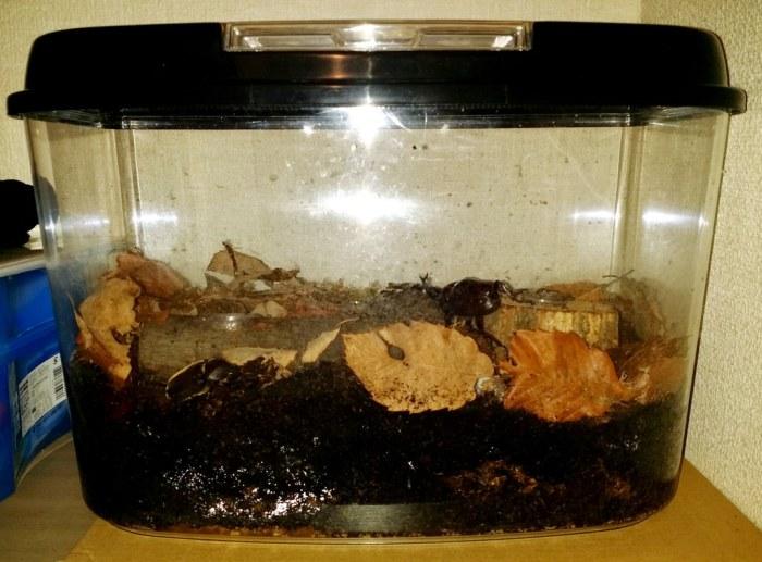 Terrarium pour scarabée rhinocéros - 18