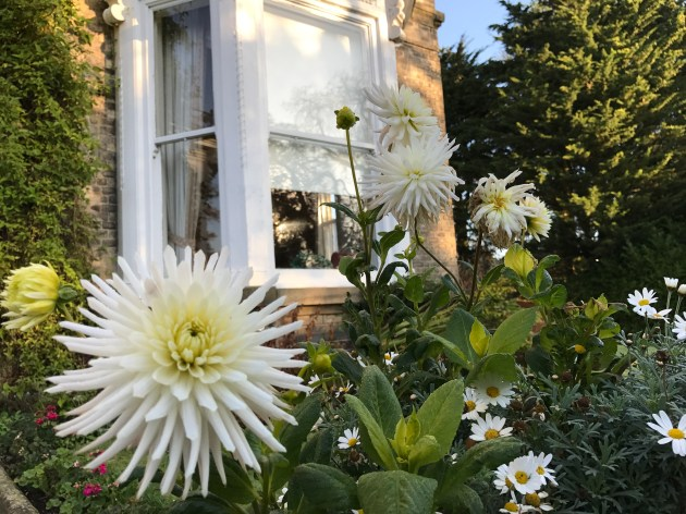 Swanland House Residential Home, Swanland, Care, Care Home, Fresh, Garden, Morning, Flowers