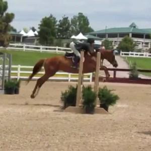 kallini - horse for sale in oregon