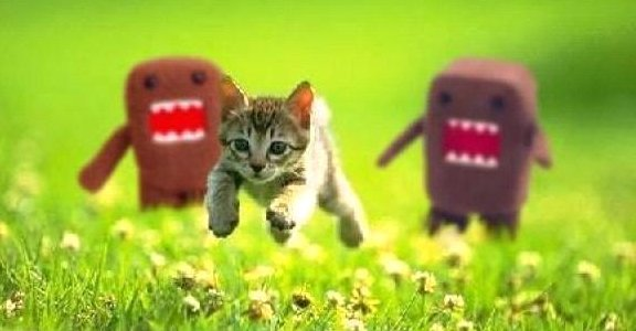 Kitten escaping from the scary aliens