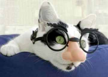 Cat Disguise!