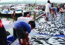 Revisi UU Perikanan : Mengancam Nelayan Dan Produksi Industri Perikanan