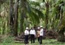 Minyak Kelapa Sawit Indonesia Kena 'Ban' di Eropa