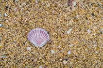 Freycinet-Shell2-IMG_2264