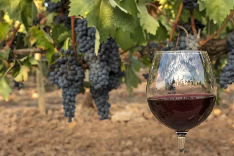 spanish facts about wine