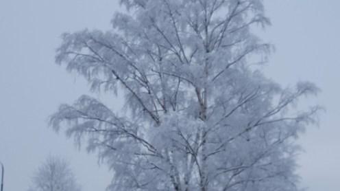 2018_winter_03