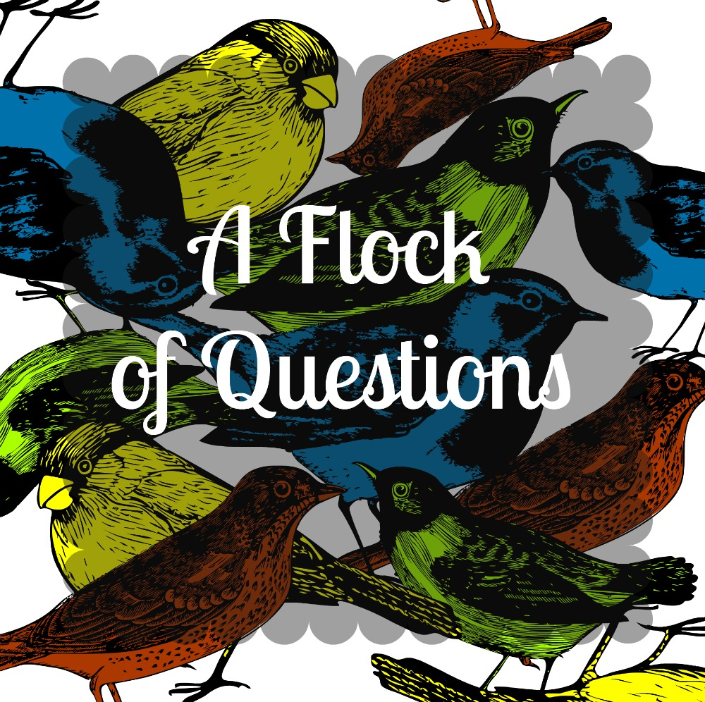 A Flock of Questions