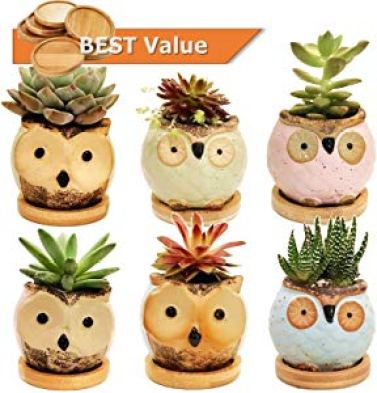 Chez JuJu Ceramic Owl Succulent Pots Cute Animal Flower… Sweepstakes