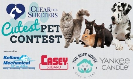 WAVY Clear the Shelters Cutest Pet Contest