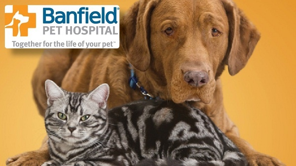 Tell Banfield Pet Hospital Feedback in Client Experience Survey