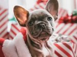 Most Wonderful Holiday Gifts Sweepstakes - Win Gift Card